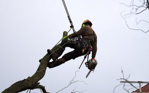best boots for climbing trees | best tree climbing boots | best arborist boots | best climbing boots for arborist | tree climbing boots | best boots for tree work